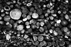 Holzhintergrund-Beschaffenheitsausschnitt Lizenzfreies Stockbild