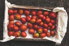 Holzkiste mit gerade ausgewählten Tomaten lizenzfreie stockfotos
