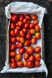 Holzkiste mit gerade ausgewählten Tomaten stockbild