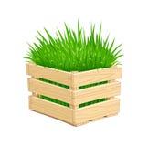Holzkiste mit grünem Gras Lizenzfreies Stockbild
