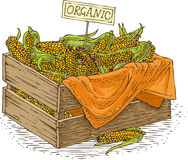 Holzkiste mit reifem gelbem Mais Stockbilder