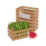 Holzkiste voll des Wassermelone lokalisierten Vektors lizenzfreie abbildung