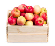 Holzkiste voll frische Äpfel lokalisiert Stockfotografie