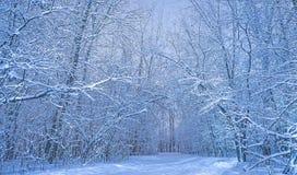 Holznaturlandschaft am kalten Tag lizenzfreie stockbilder