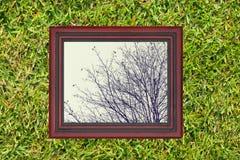 Holzrahmen mit Ansicht der trockenen Niederlassung af-Baums, auf grünem Gras Lizenzfreie Stockfotografie