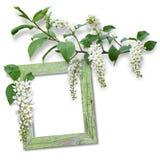 Holzrahmen mit Frühlingsblumen stockbild