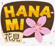 Holzschild, Band und Cherry Flower Announcing Hanami und Frühjahr, Vektor-Illustration vektor abbildung