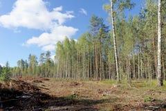 Holzschlag im europäischen Teil von Russland Stockbilder