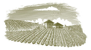 Holzschnitt-Weinberg-Landschaft lizenzfreie abbildung