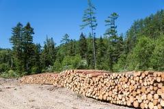 Holzstöße an einem Waldprotokollierungsstandort Lizenzfreie Stockfotografie