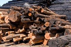 Holzstapel Lizenzfreie Stockbilder