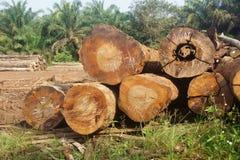 Holzstapel Lizenzfreies Stockbild