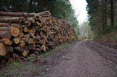 Holzstoß Lizenzfreie Stockbilder
