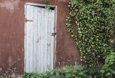 Holztür- und Efeublätter auf Wand Lizenzfreie Stockbilder