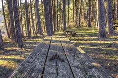 Holztisch im Kiefernwald Stockbild