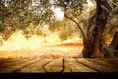 Holztisch mit Olivenbaum Lizenzfreie Stockbilder