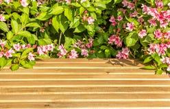 Holztisch und blühendes Niederlassungen weigel im Garten Stockfotografie
