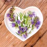 Homéopathie et cuisson avec l'hysope images stock