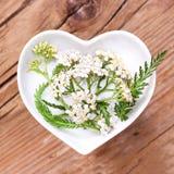 Homéopathie et cuisson avec la millefeuille argentée photo stock