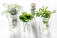 homéopathie Herbes médicinales en verre sur le fond blanc photos stock