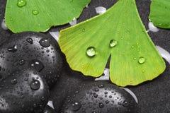 Homöopathie mit heißen Steinen und Ginkgo Stockbilder