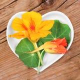 Homöopathie und Kochen mit Kapuzinerkäse Lizenzfreies Stockbild
