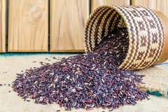 Hom Nil black jasmine rice in thailand Stock Photos