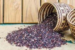 Hom zero czerni jaśminowi ryż w Thailand Obraz Stock