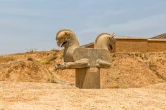 Homa-Vogel in Persepolis Stockbilder