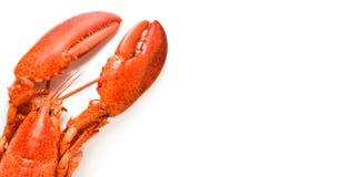 Homar odizolowywa? Odparowanego homara owoce morza krewetkowej krewetki na bia?ym tle fotografia stock