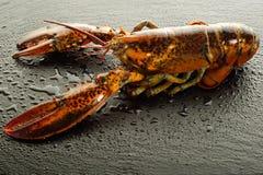 homar surowy Zdjęcie Royalty Free