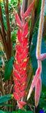 Homara kwiatu kwiaty Zdjęcie Royalty Free