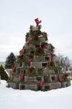 Homara oklepa wakacje drzewo Obraz Royalty Free