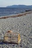 Homara oklepiec i otoczak plaża w Kanada Obraz Royalty Free