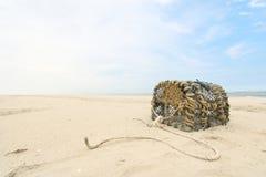 Homara oklepiec przy Północnym dennym wybrzeżem Zdjęcie Royalty Free