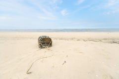 Homara oklepiec przy Północnym dennym wybrzeżem Zdjęcie Stock