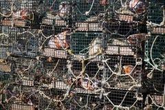 homara sterty oklepowie Zdjęcie Stock