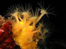 Homard européen commun sous-marin dans une caverne Photos libres de droits
