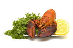 homary białe tło obraz stock
