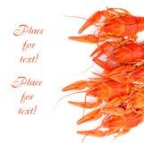 homary biały Zdjęcia Royalty Free
