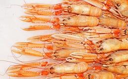 homary w czerwone Obrazy Royalty Free