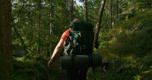 Hombre activo con la mochila grande que camina en paisaje hermoso del bosque en la puesta del sol almacen de video