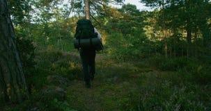 Hombre activo con la mochila que camina en la trayectoria de la montaña en la puesta del sol almacen de metraje de vídeo