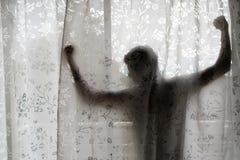 Hombre adolescente que estira su brazo detrás de la cortina Fotos de archivo libres de regalías