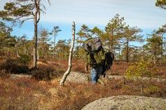 Hombre adulto, fotógrafo de sexo masculino fuerte que lleva las mochilas pesadas, caminando en el bosque noruego para su lanzamie Imagen de archivo libre de regalías