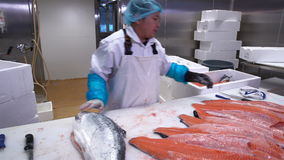 Hombre asiático que corta un prendedero de salmones en la tabla en la fábrica de los pescados Tiro del carro metrajes