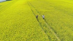 hombre cariñoso y mujer que llevan a cabo las manos mientras que corre en granja de la violación de semilla oleaginosa metrajes