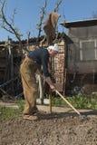 Hombre caucásico que cultiva un huerto en un día soleado de la primavera fotos de archivo libres de regalías