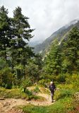 Hombre con caminar el equipo que camina abajo en rastro de montaña durante Fotos de archivo libres de regalías