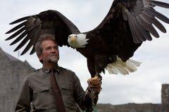 Hombre con el águila Imagen de archivo libre de regalías